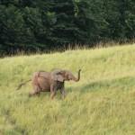 Safari Nyonié