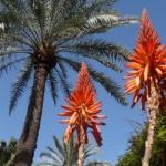 Jardins de Majorelle2