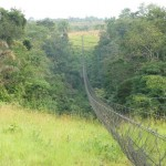 Pont de câble - Parc de la Lékédi