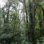 Parc de Santa Elena