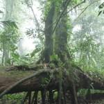 Parc de Santa Elena - Tree'Ception