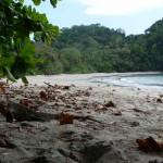 Parc Manuel Antonio - Iguane sur la plage
