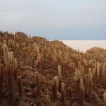 Salar d'Uyuni - Isla Incahuasi