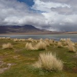 Lagunas altiplanicas