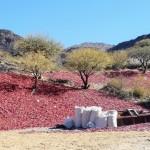Sud de Salta - piments séchés