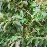 Chutes d'Iguazu – Colibri