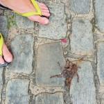 Sao Luis - Traversée de mygale