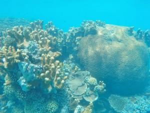 Zanzibar - fonds marins