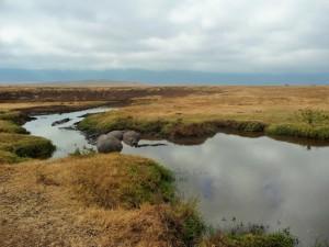 Ngorongoro - hippopotames