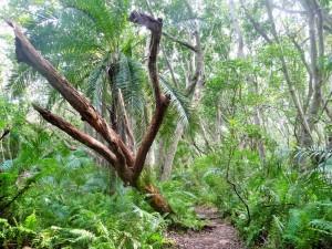 Zanzibar - Forêt des colobes