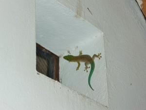 Ifaty - Gecko