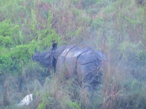 Chitwan - Rhinocéros