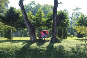 Rangoun - Parc Kandawgyi