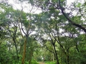 Chitwan - Randonnée