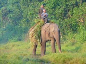 Chitwan - Eléphant