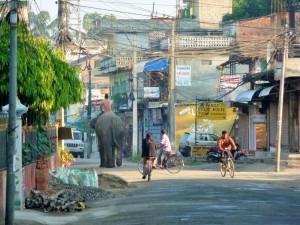 Chitwan - Eléphant en ville