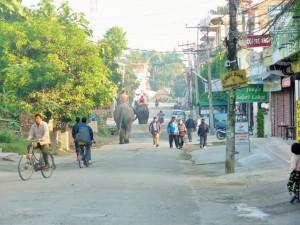 Chitwan - Eléphants en ville