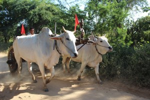 Bagan - Charette