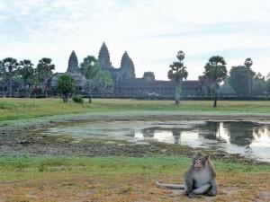 Angkor Wat - Macaque