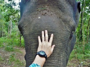 Elephant Community Project