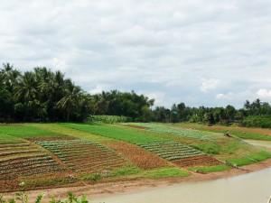 Battambang - Cultures