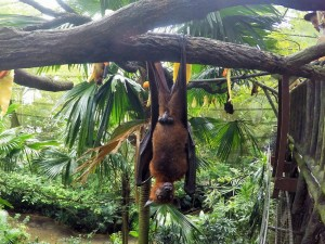 Zoo - Roussette