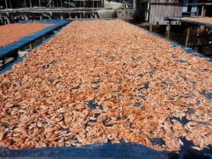 Koh Kood - Crevettes séchées