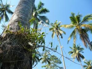 Koh Kood - Resort sympa
