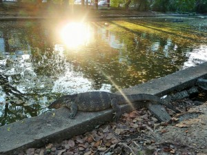 Bangkok - Varans au parc