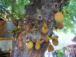 Chiang Mai - Jacquier