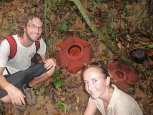 Khao Sok - Rafflesia