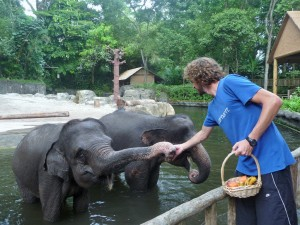 Zoo - Nourrissage des éléphants