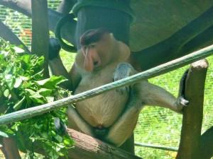 Zoo - Nasique