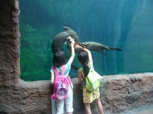 River Safari - Loutres géantes