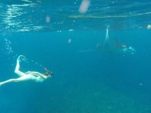 Nusa Lembongan - Raies mantas