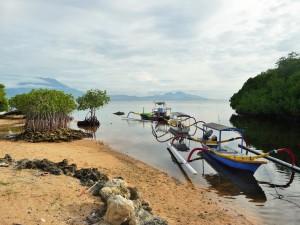 Nusa Lembongan - Mangroves