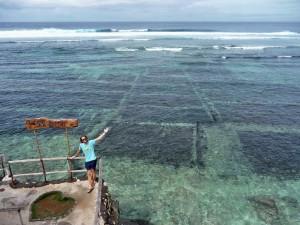 Nusa Ceningan - Culture d'algues