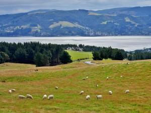 Dunedin - Péninsule d'Otago
