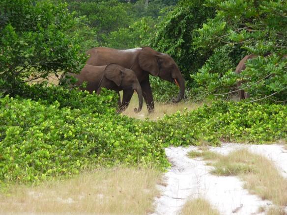 Safari Loango