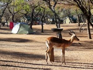 Pilanesberg - Notre campement