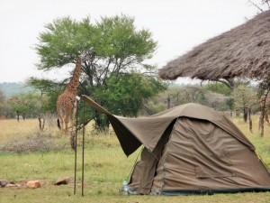 Serengeti - Campement