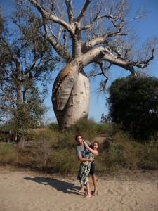 Baobabs amoureux