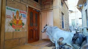 Jaisalmer - Je veux manger!