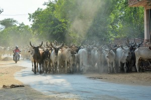 Route pour Mandawa