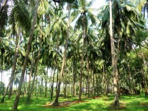 Goa - Old Goa