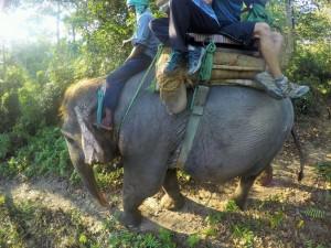Chitwan - Safari éléphant
