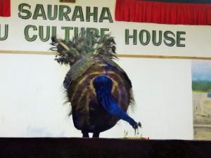 Chitwan - Danse culturelle