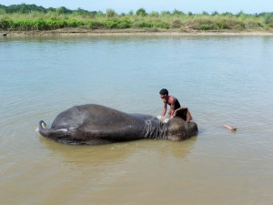 Chitwan - Baignade