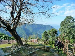 Trek Mardi Himal - Kande