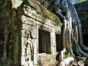 Ta Phrom - Fromager géant